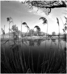 [ICCD2014] Wide view (Italian Film Photography) Tags: lake 6x6 film water reflections lago explore international riflessi pellicola fomapan200 explored kiev60ttl commiecamera day2014 iccd2014