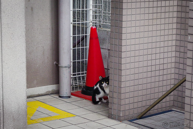 Today's Cat@2014-06-09
