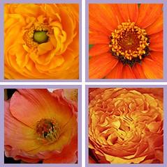 O heilige Dreifaltigkeit, wahr Einigkeit (amras_de) Tags: flower fleur flor blomma blume fiore blüte blomst virág lore bloem blóm çiçek floro kwiat flos ciuri kvet kukka cvijet flouer bláth cvet zieds õis floare blome žiedas