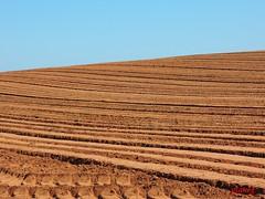 Furrows in the Good Earth (photo fiddler) Tags: hot field novascotia farm may soil blomidon furrows 2014