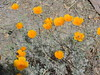 CIMG6456 (kazadmanesh) Tags: و بهار خشکسالی
