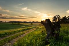 Brockenblick - Elbingerode (Gruenewiese86) Tags: sunset summer sun sunlight canon evening abend sonnenuntergang brocken dmmerung grn sonne baum sonnenstrahlen harz gegenlicht wurzel 6d 2014 abenddmmerung romantisch sachsenanhalt elbingerode