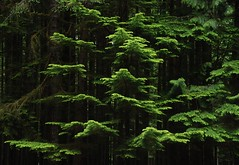 Golden Ears Provincial Park (Ian Threlkeld) Tags: trees canada nature landscape moss nikon scenery bc parks forests goldenearsprovincialpark d80