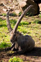 Topaz ReMask (Gjesdal.org) Tags: norway zoo norge nikon kristiansand dyrepark dyreparkenikristiansand vestagder d7100 sigma150500mmf563apodgoshsm topazdetail topazremask topazclarity