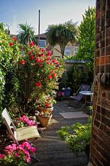 The Garden...After! (Jainbow) Tags: plants garden bottle chair deckchair brush decking shrubs pieris pelargoniums jainbow