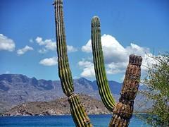 Cactus on the hill (Kirt Edblom) Tags: vacation cactus beach water sailboat golf mexico boats bay sand nikon scenic resort wife baja bajacaliforniasur spa loreto hdr seaofcortez bcs gulfofcalifornia 2014 danzante vdp gaylene villadelpalmar easyhdr nikond7100 islandsofloreto danzantebay wildloreto bahiadeloreto