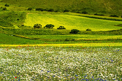 Impressionismo (marypink) Tags: green nature bloom flowering umbria 70300mmf456 montisibillini fioritura castellucciodinorcia nikond5200