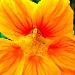 Garden Flower (Uwe Maeurer) Tags: flowers plants plant flower colour garden lumix colours pflanze pflanzen blumen panasonic blume farbe garten flowerpower bunt farben lf1