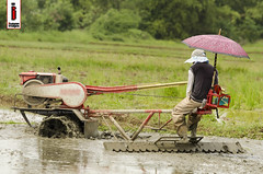 Halang/Linang 08 (Soil Cultivation) (ilusyonimages) Tags: street tractor asian photography asia farm philippines farming images illusion filipino farmer ricefields handtractor ilusyon