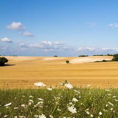 15  22 juillet 2014 (-CyRiL-) Tags: france lot midipyrenees sudouest midipyrénées lotdepartment cyrilbkl departementdulot cyrilnovello saintealauzie