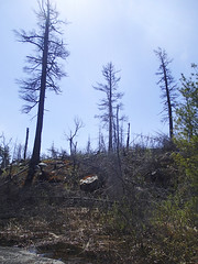 Burned shoreline on Lake One