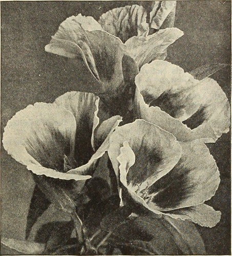 "Image from page 92 of ""Dreer's garden book 1915"" (1915)"