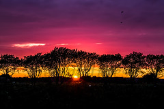 """Sunset 03-08-2014 • <a style=""""font-size:0.8em;"""" href=""""http://www.flickr.com/photos/125767964@N08/14819833321/"""" target=""""_blank"""">View on Flickr</a>"""