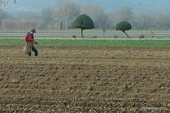 Sembrando espárragos (Landahlauts) Tags: agricultura andalucia caminodelsoto esparrago fujifilmfujinonxc1650mmf3556oisii fujifilmxa2 huetortajar siembra tareasagricolas ponientegranadino