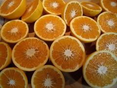 Poorman Orange (robertlambertbrand) Tags: robertlambert marmalade yuzu whitegrapefruit sevilleoranges grapefruit oranges poormanorange poorman pommelo orovalmandarin mandarin oroval kinkojipommelohybrid kinkoji kaffirlimes kaffir limes rangpurlimes rangpur genelesterranch sacatoncitrumelo sacaton citrumelo bloodorange