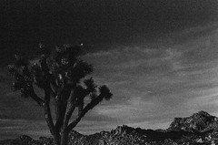 Nightfall in Joshua Tree (Andre Guerette) Tags: joshuatree dark under exposed pushprocess film ilfordhp5 autaut analog andreguerette night nightfall slr sky tree mountains landscape mountain grain grit 35mm fdf18 polarizer push400to1600iso blackwhite blackandwhite bw noir nature joshuatreenationalpark