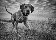 Oh, Johnny! II (Dan-Schneider) Tags: streetphotography schwarzweiss blackandwhite bw noir dog sky silhouette monochrome clouds mood nature
