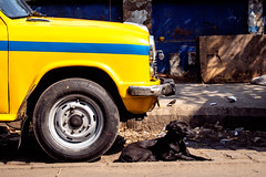 (Jpierrel) Tags: inde india street kolkata calcutta westbengal ambassador taxi taxiambassador fuji fujifilm xt1 1655 dog chien birds bird oiseau oiseaux xf1655mmf28 fujifilmxt1 fujixt1