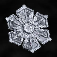Snowflake-a-Day #57 (Don Komarechka) Tags: snowflake snow flake ice crystal skeletal arrowhead symmetry macro focusstacking frozen mpe