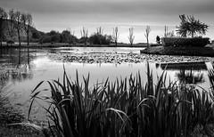 Lazy afternoon (alain01789) Tags: nb monochrome bw landscape étang pond parc park velvia