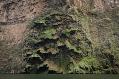 Tuxtla Canyon del Sumidero Christmas Tree Falls-3-2