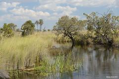 Okavango River (naturalturn) Tags: marsh wetland water river okavangoriver moremi moremigamereserve okavangodelta okavango delta botswana image:rating=5 image:id=204196