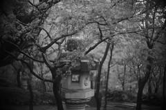 旧朝倉家住宅 (Typ250) Tags: 渋谷区 東京都 日本 jp leicam leica leicammonochrom monochrome mmonochrom xenonf2f5cm xenon schneiderkreuznach