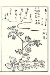 Japanese-lantern (Japanese Flower and Bird Art) Tags: flower japaneselantern physalis alkekengi solanaceae shunsen ooka kano woodblock picture book japan japanese art readercollection