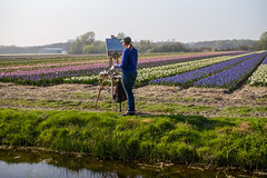 Painting Dutch Spring (romanboed) Tags: leica m 240 summilux 50 europe netherlands holland dutch flower fields flowers field farm agriculture agribusiness spring jaro holandske kvetiny jarni hyacinths artist painter portrait painting