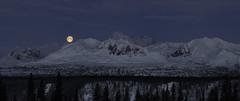 855_Panorama (Ed Boudreau) Tags: alaska alaskalandscape landscape landscapephotography winter winterscene winterscape denali mtdenali mtmckinley denalirange denalistatepark moon fullmoon wintermoon moonoverdenali snow mountains alaskamountains mountainrange usa