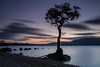 Lonely Tree (Marc Böhning) Tags: tree milarrochy bay loch lomond scotland canon 17 40 lee filters sunset cloud lake shore