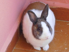 Conejo (kalima2006) Tags: conejo rabbit