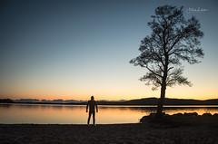 Not Alone (Fredrik Lindedal) Tags: lindedal nature landscape lake sunset glow tree sweden sverige sky skyline serenity calmness harmony colors