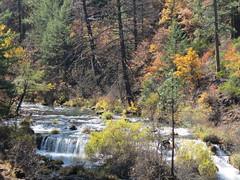 Burney Creek in Fall (Explored) (claypeoples) Tags: fall creek river waterfall foliage color oak pine stream water tree orange yellow green