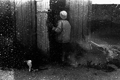 Snowfall (series Parallel World) (sergeyvaraksin) Tags: multi¬exposure doubleexposure street canon 50e monochrome blackandwhite bw dream concept art analogue film camera analog surreal creative tamron outdoor human person people snowfall cat snow