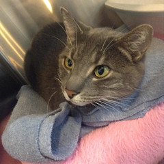 Enzo - 4 year old neutered male