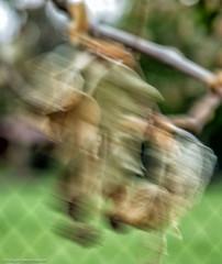 Intentional Blur / Absichtliche Unschärfe - Zweig im Wind (J.Weyerhäuser) Tags: absichtlicheunschärfe movement hechtsheim composing intentionalblur wind zweig blatt