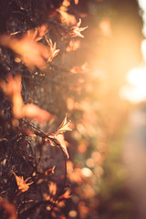 Wall on fire (sue.konvalinkova) Tags: light sunset sun flare wall fire flickering flame nature bokeh depthoffield nikon evening beautiful goldenhour