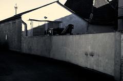Surreal ... (Manfred Hofmann) Tags: brd kurpfalz orte projekte surreal flickr öffentlich schifferstadt pfalz