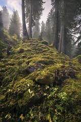 Enchanted Forest (Manuel.Martin_72) Tags: graubünden swissalps switzerland enchanting fairytale magic foggy mysterious forest grass hills rocks stones trees woods fog rainy evening ch