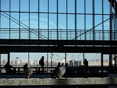 Birds and people (amm78) Tags: 2017 epl3 olympusm14004200mmf3556ez stpetersburg city mirrorless olympus street bird