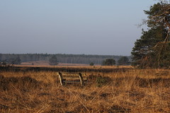 A nice rest (Theo Bauhuis) Tags: bench heather veluwe bankje gras grass bluesky tree pine
