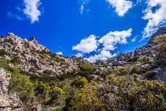 Cime dei 7 fratelli (matta.eu) Tags: trekking montagna verdeù verde macchiamediterranea natura wild sardegna paesaggio