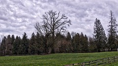 Grand Trees (robinlamb1) Tags: landscape trees outdoor pasture field fences oldtrees dramaticsky sky clouds ruralscene rural abbotsford bc