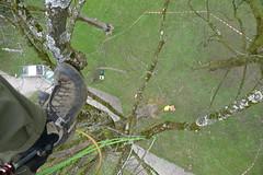 Acer (arborist.ch) Tags: baumpflege baum baumklettern arborist arboriculture wood treecare treeclimbing tree