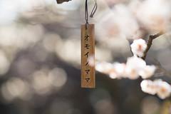 人生が二度あれば (qrsk) Tags: flower blossom japaneseapricot ume nature light オモイノママ ウメ 梅 春