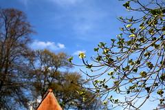 Lente in de Leuvense Kruidtuin (Kristel Van Loock) Tags: leuven louvain lovanio lovaina drieduizend visitleuven seemyleuven atleuven loveleuven leveninleuven kruidtuin kruidtuinleuven leuvensekruidtuin hortusbotanicuslovaniensis botanicalgarden botanischetuin botanischergarten jardinbotanique jardinbotaniquedelouvain jardimbotanico jardinbotanico giardinobotanico ortobotanico lente2017 spring2017 march2017 maart2017 springseason spring lente primavera printemps vlaanderen vlaamsbrabant visitbelgium visitvlaanderen visitvlaamsbrabant visitflemishbrabant flemishbrabant brabantflamand brabantefiammingo belgium belgique belgio belgien belgica belgië springisintheair lenteindekruidtuin