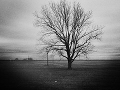when i look out the car window i see trees waving their sticky branches at me like arms and hands (i wen† lef†) Tags: treeoflife roadtrip louisiana freedom blackandwhite trees loneliness