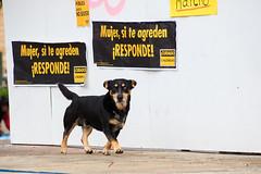 Perro coyhaiquino (Pablo Rodriguez M) Tags: chile coyhaique dog perro feminist feminista
