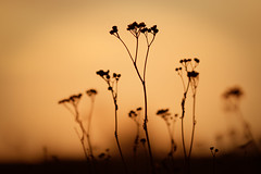 Silhouettes (Bruno MATHIOT) Tags: orange color couleur nature outdoor planet plant plante alsace france french sigma 105 macro canon 760d shadows